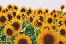 flower979