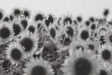 flower979-3