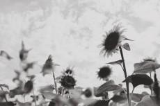 flower981-3