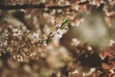 flower982-2