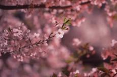 flower982