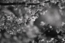 flower982-3