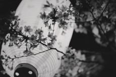 flower983-3