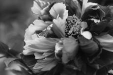 flower987-3