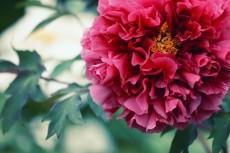 flower992