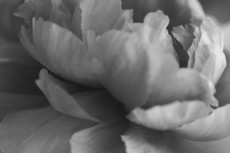 flower993-3