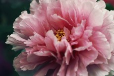 flower994-2