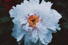 flower995-2