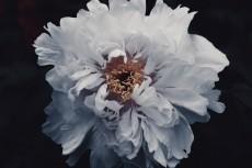flower995