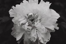 flower995-3