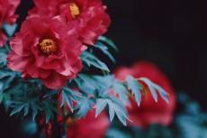 flower996-2