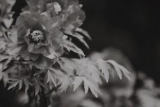 flower996-3