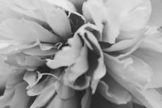 flower997-3