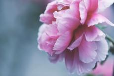 flower998-2