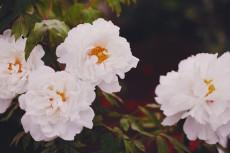 flower999-2