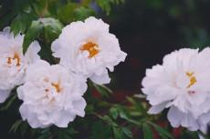 flower999