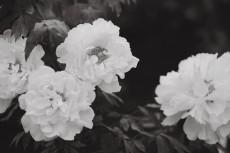 flower999-3