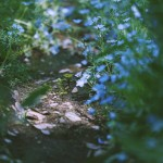 【高解像度】木漏れ日とネモフィラ(3パターン)