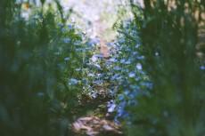 flower1013