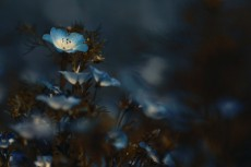 flower1017-2