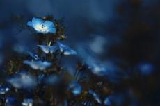 flower1017