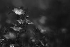flower1017-3