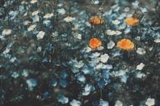 flower1018-2