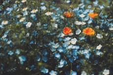 flower1018