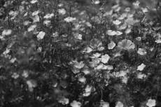 flower1018-3