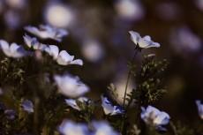 flower1019-2