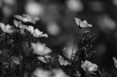 flower1019-3