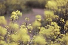 flower1021-2