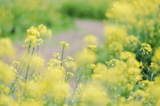 flower1021