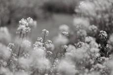 flower1021-3
