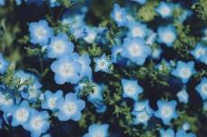 flower1025-2