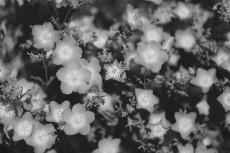 flower1025-3