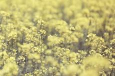flower1026-2