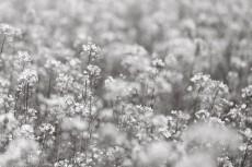 flower1026-3