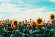 flower1029