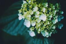 flower1030