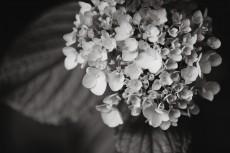 flower1030-3