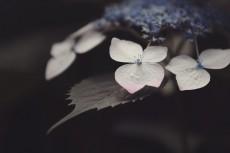 flower1031-2