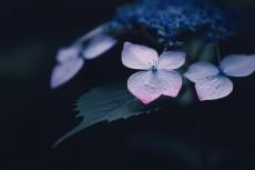 flower1031