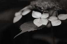 flower1031-3
