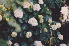 flower1032-2