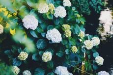 flower1032