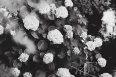 flower1032-3