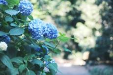 flower1033-2