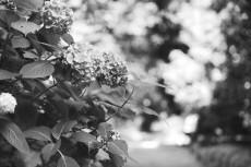 flower1033-3