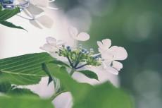 flower1034-2